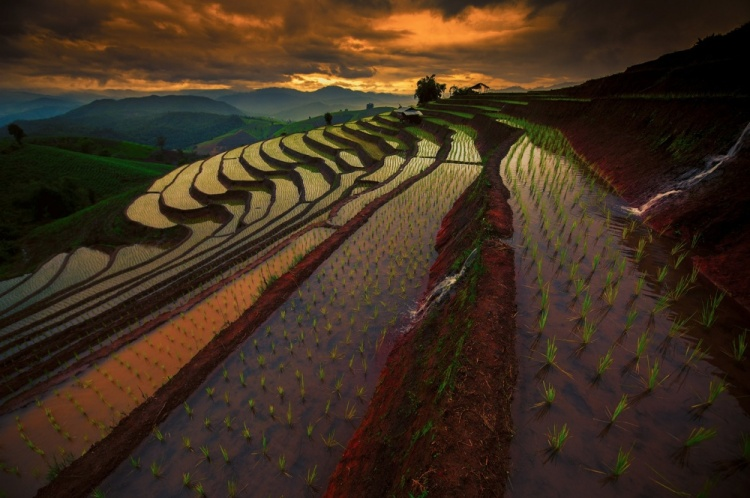 Chinese-Rice-Fields